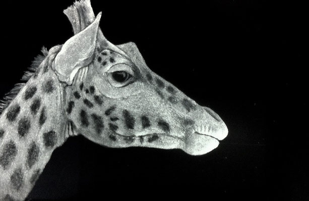 'giraffe'  engraved optical crystal 12cms wide