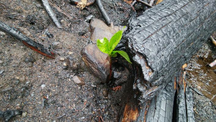 ブースには釜石市の山林火災の復旧支援のための募金箱も設置します。
