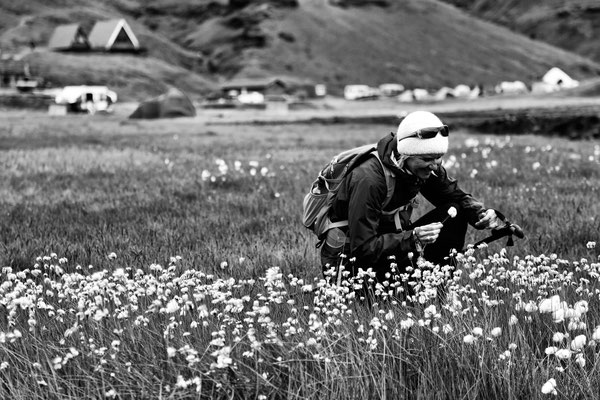 Sigrid Island Wollblumen