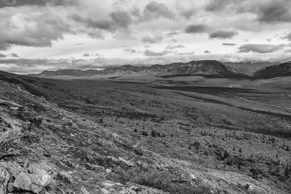 Denali Nationalpark Alaska - 5