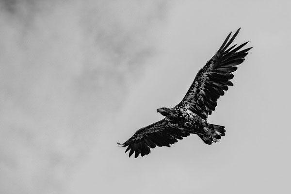 Und überall Adler
