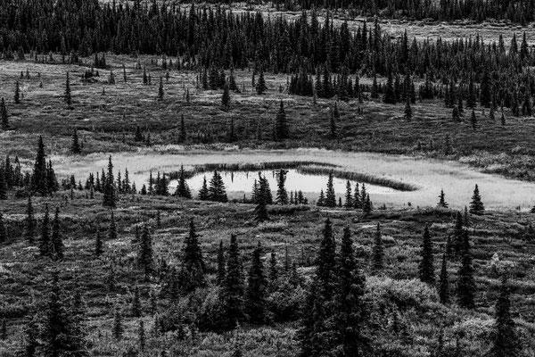 Denali Nationalpark Alaska - 51