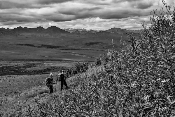 Denali Nationalpark Alaska - 14