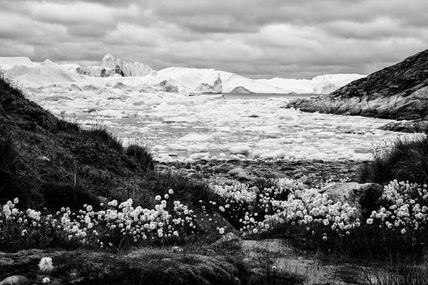 Disko Bay Ilullisat Grönland 4
