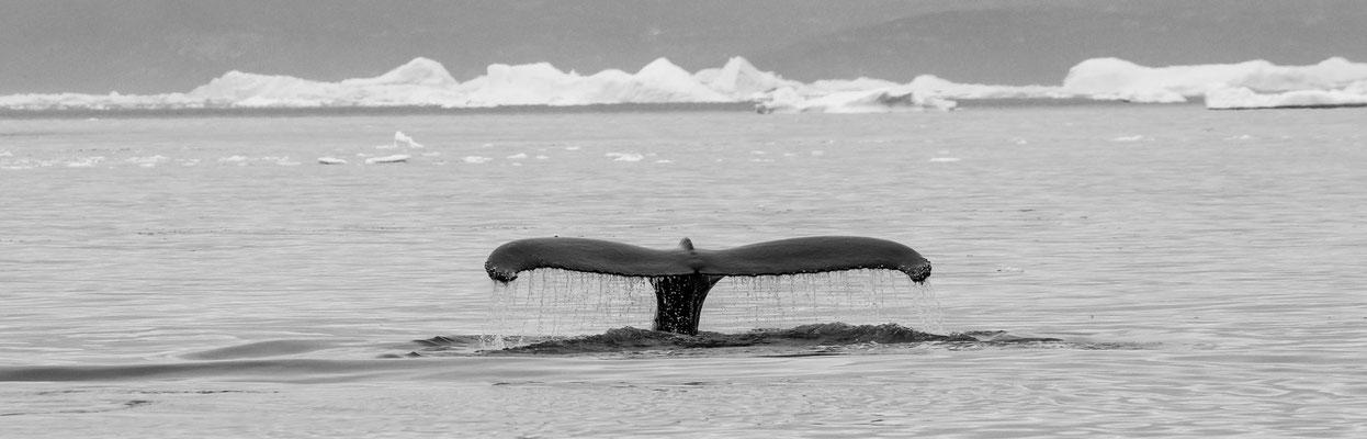 Disko Bay Ilullisat Grönland 14