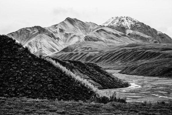 Denali Nationalpark Alaska - 41