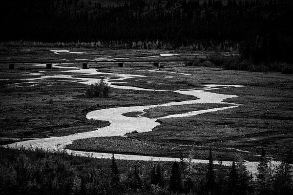 Denali Nationalpark Alaska - 38