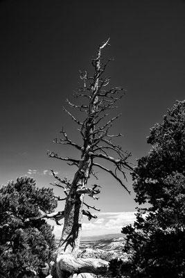 Bryce Canyon 9