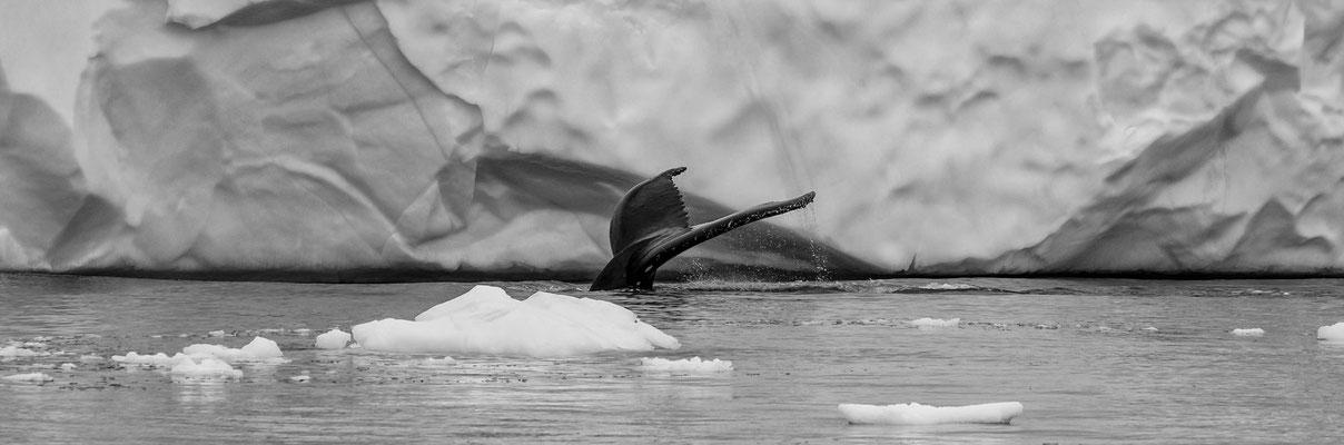 Disko Bay Ilullisat Grönland 13