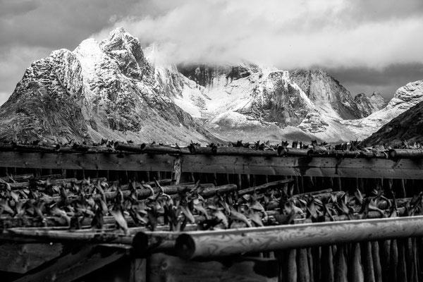 Lofoten Landscape 21