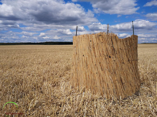 The protected nest in a harvested field-- © Charel Klein