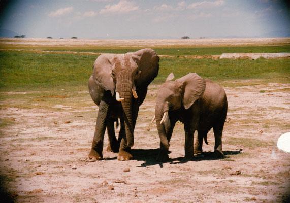 Zwischenstop Amboseli