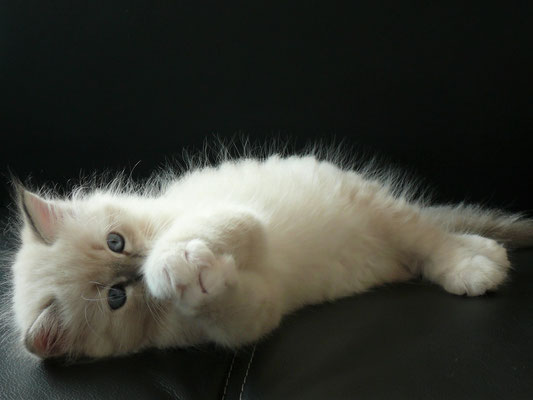 Filou von der Mondblume, 8 Wochen alt