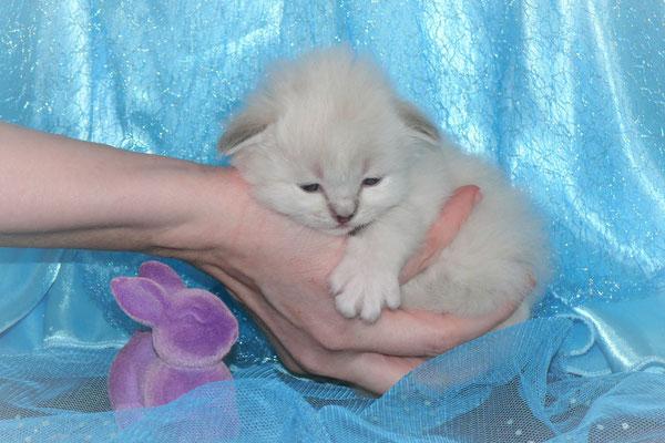 Filou von der Mondblume, 3 Wochen alt