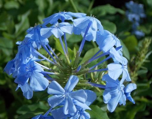 Flor em Araruama.