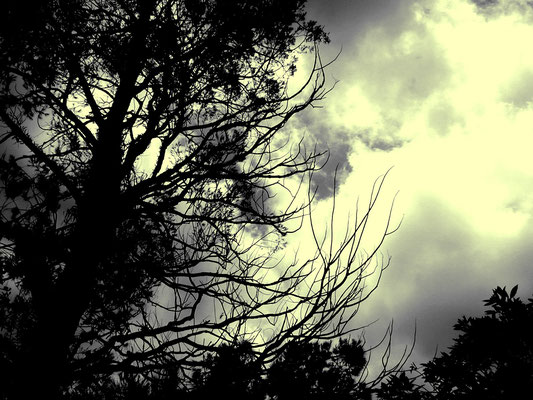 Arvore em tempo nublado, Petrópolis, 2006.