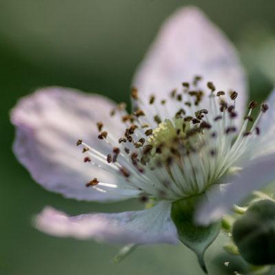 jolis dessous - photo nature bretagne esprit bulles de Vie @johannegicquel