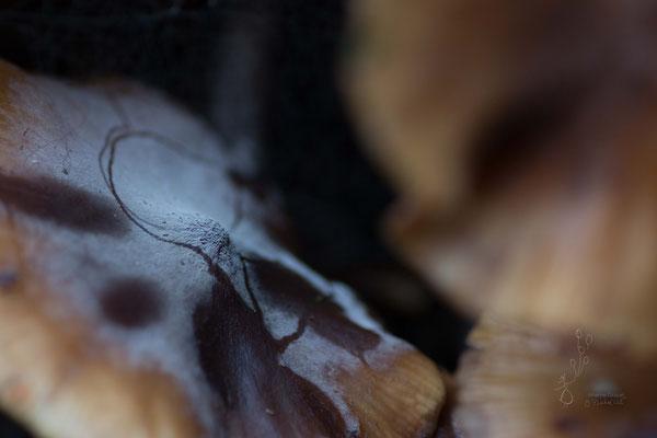 un velouté de champignon. photo macro bretagne @johannegicquel