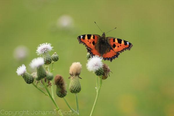 photo bretagne nature britain morbihan 56 @johanne gicquel o plurielle