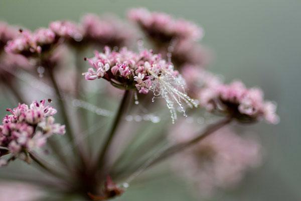 une plante de bord de rive - photo nature bretagne esprit bulles de Vie @johannegicquel3