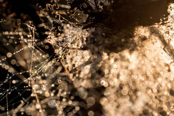 sous les sunlights photo macro bretagne @johannegicquel