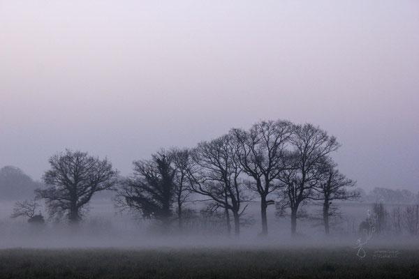 photo bretagne paysage macro nature @johannegicquel o plurielle