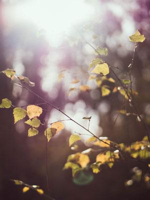 Automne Forêt de Bercé