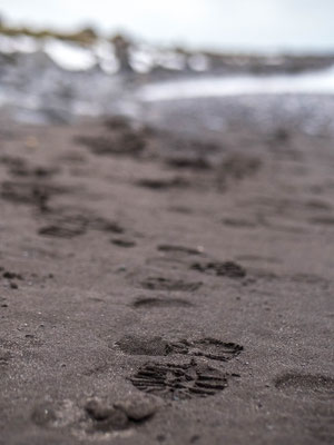 Plage de sable noir - Road trip 10 jours en Islande