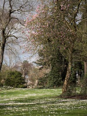 Nantes, jardin botanique
