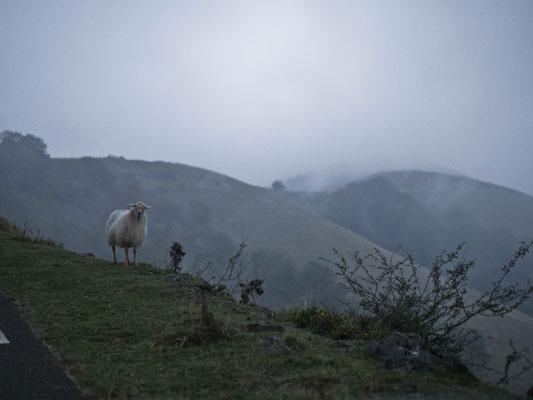 Pyrénées, Pays Basque