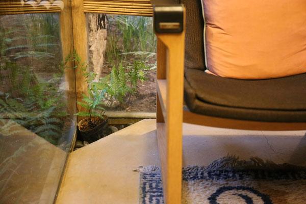 椅子の背後に植物が