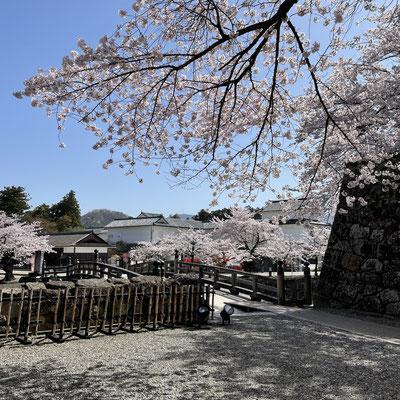 彦根城は見学せずに…またゆっくり来ます
