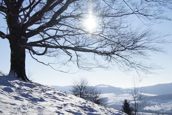 Blick vom  Wachtküppel in die Rhön