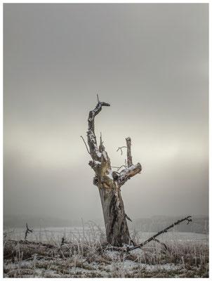 Winterlandschaft mit Raureif bei Stockach 2550