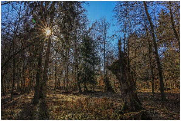 Bäume im Unterhölzer Wald 6294