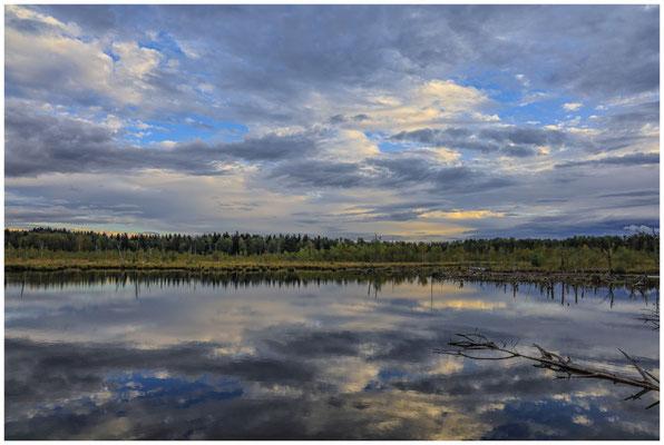 Uferlandschaft Schwenninger Moos 4258