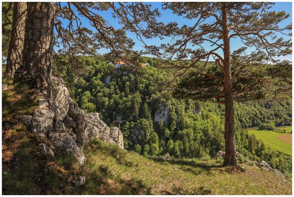 Blick auf Burg Wildenstein vom Bandfelsen 7564