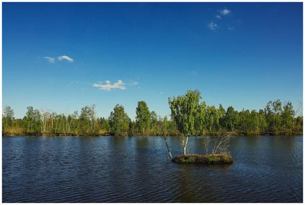 Uferlandschaft Moorteich 7416