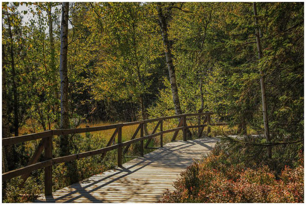Auf Bohlenwegen durch das Naturschutzgebiet 4332