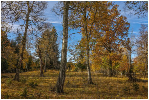 Bäume im NSG Irndorfer Hardt 1330