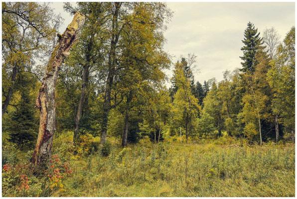 Landschaft im Irndorfer Hardt 8544