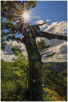 Baum beim Schaufelsen 8038