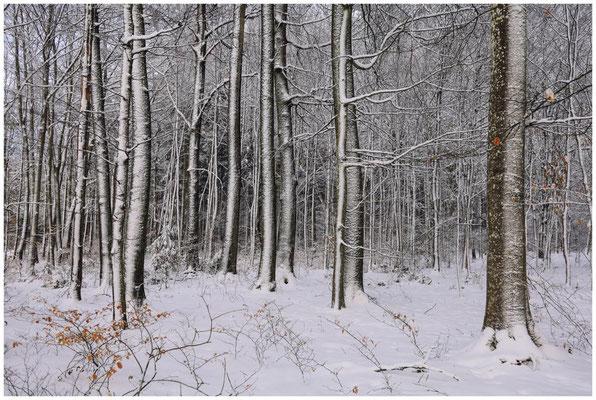 Verschneite Bäume 5677