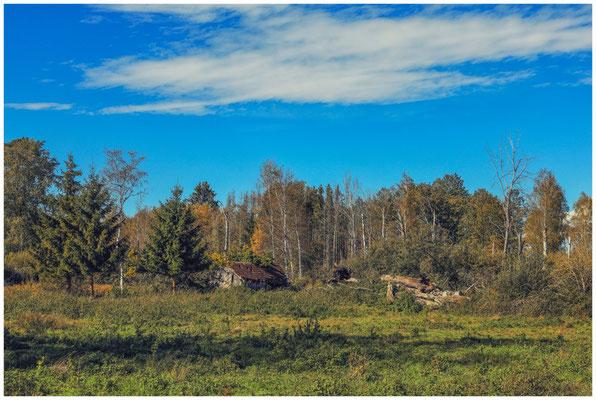Landschaft im Pfrunger-Burgweiler Ried mit ehemaliger Torfhütte 4413