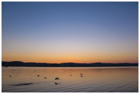 Morgendämmerung auf der Insel Reichenau 9417