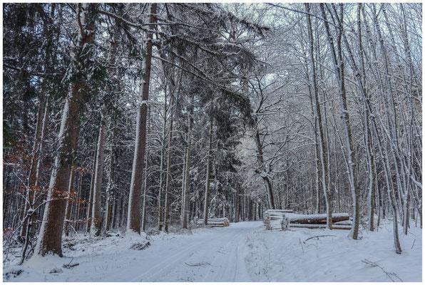 Verschneiter Wald 5689