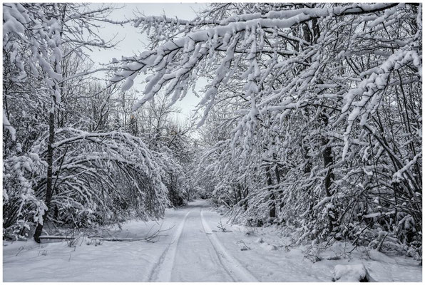 Verschneiter Winterwald bei Burg Wildenstein 5843