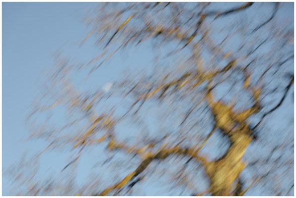 Baum mit Halbmond 6376