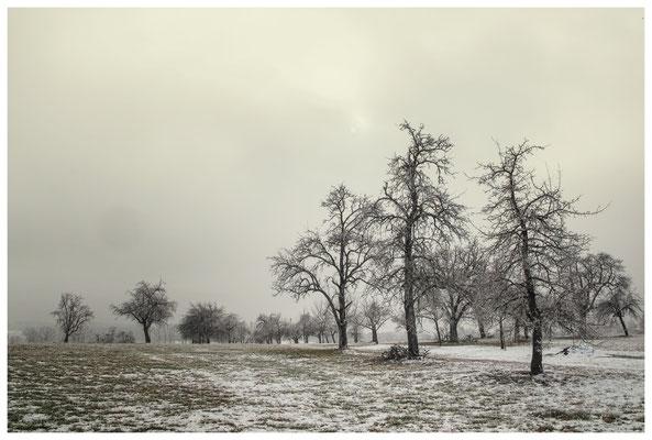 Winterliche Streuobstwiese mit Raureif 2554