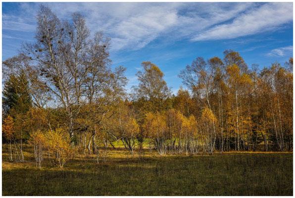 Bäume im NSG Irndorfer Hardt 1311
